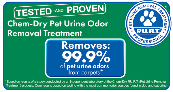 chemdry pet urine cleaning
