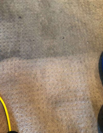 before and after carpet cleaning in montclair ca