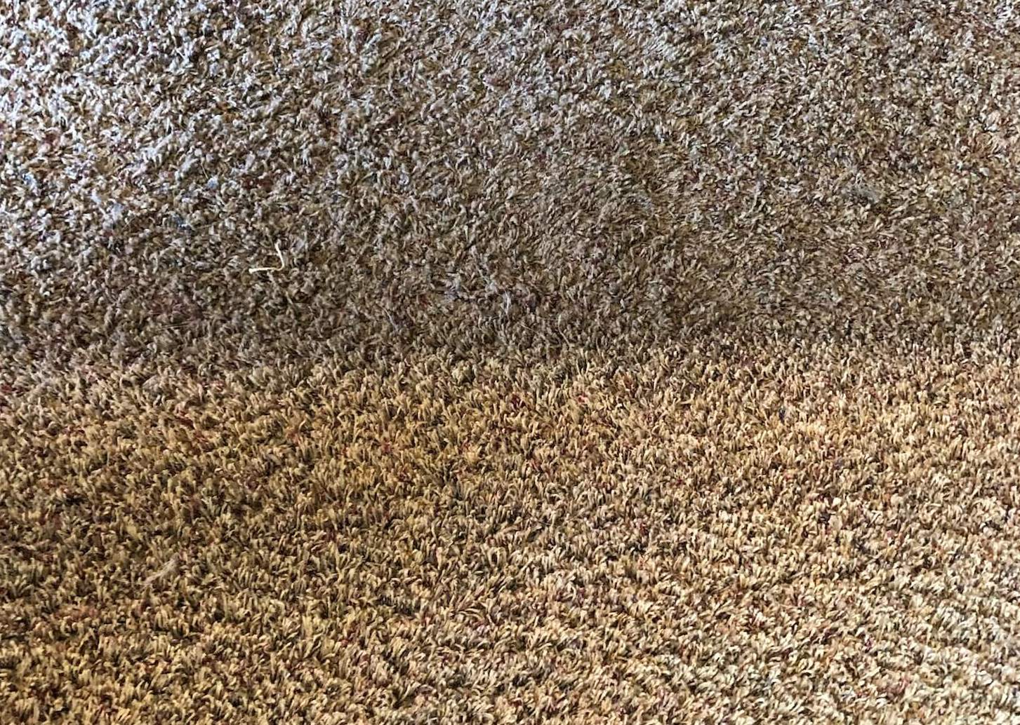 before and after carpet cleaning in upland